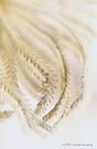 Grass Hearts 2 © Vicki Ferrari by Vicki Ferrari