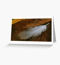 Feather Drops Greeting Card