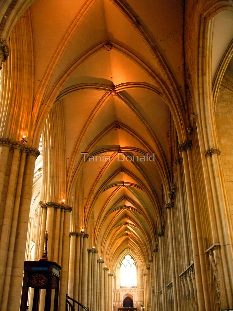 York Minster by Tania  Donald