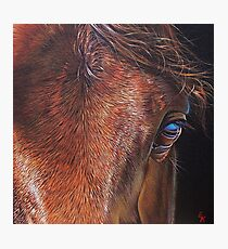 """Equine 2"" Photographic Print"
