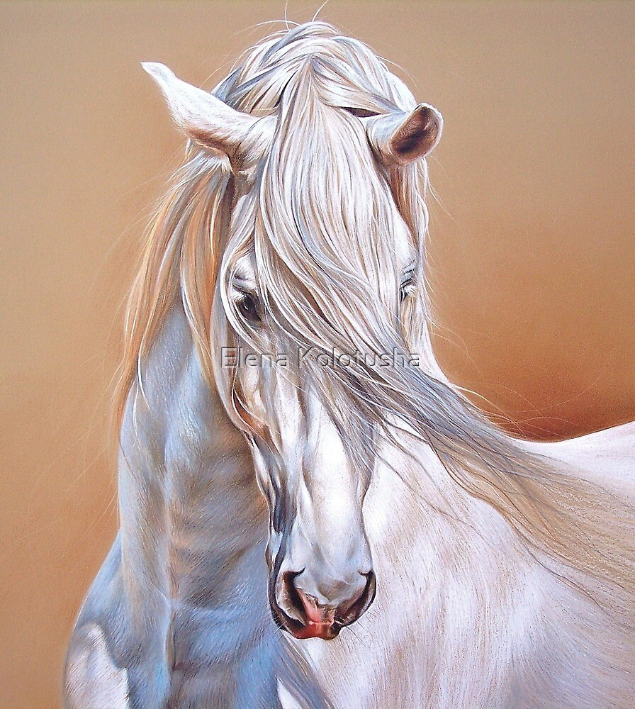"""Andalusian stallion"" - close-up by Elena Kolotusha"
