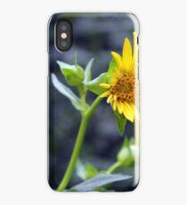 Beautiful sunny yellow flower macro. iPhone Case/Skin