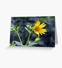 Beautiful sunny yellow flower macro. Greeting Card