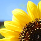A Sunflower Close Up by IreKire