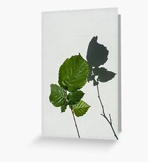 Sophisticated Shadows - Glossy Hazelnut Leaves on White Stucco - Vertical View Upwards Right Greeting Card