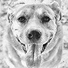 Happy Labrador Dog by Vicki Field