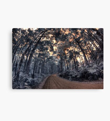 Track to Shelly Beach Canvas Print