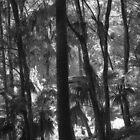 Rainforest Landscape, New South Wales by Joe Glaysher
