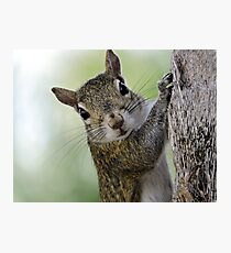 Staring Contest with a Squirrel Photographic Print