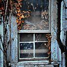 Weathered Window by Barbara  Brown