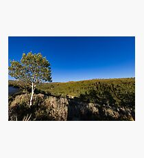 Quaking Aspen in the mountains Photographic Print