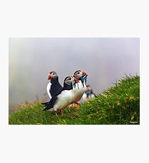 Puffin Magic Photographic Print