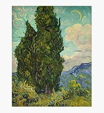 Trees by Vincent Van Gogh Photographic Print