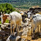 Goats & Sheep browsing Ancient Sulunto by MarcW