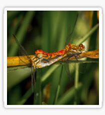 Dragonflies Mating Sticker