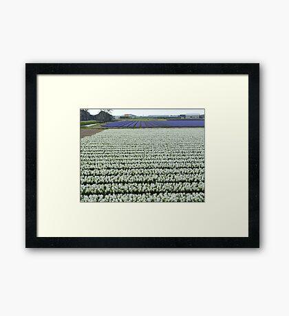 Field of white Framed Print