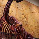 Muttaburrasaurus by R-Walker