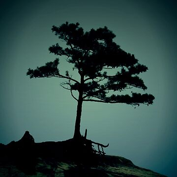 Lonesome Pine by Sanguine
