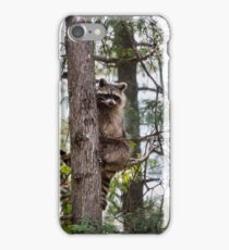 raccoon sitting in a tree iPhone Case/Skin