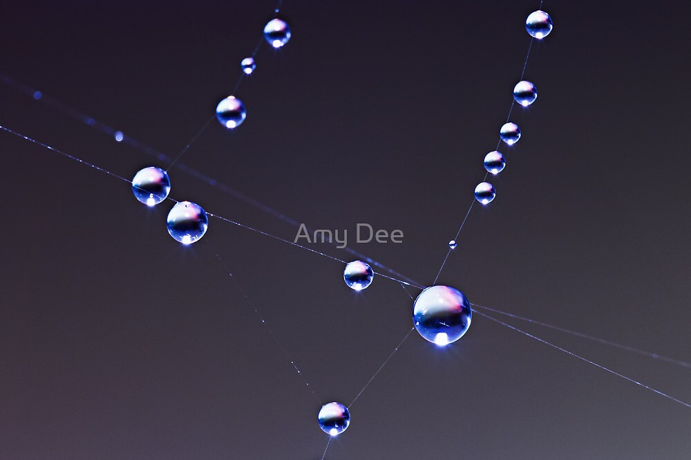 Sparkle Spider Web by Amy Dee