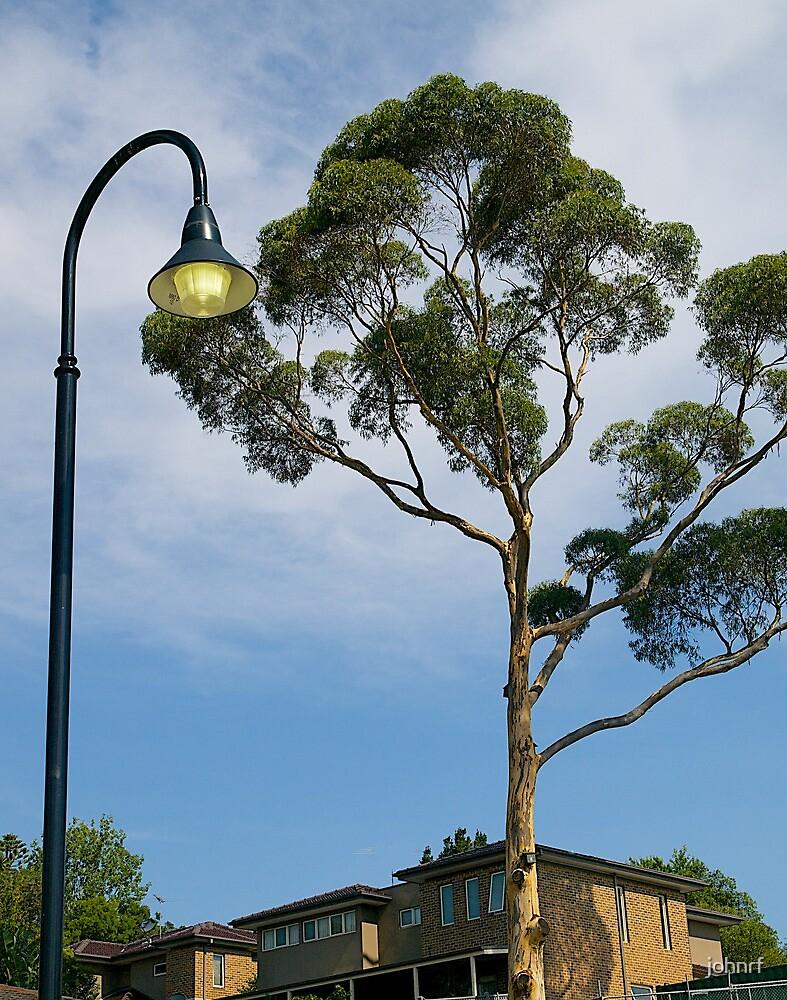 "RIP, Eucalyptus  Tree, ""Olde Berwick"", Victoria, Australia. by johnrf"