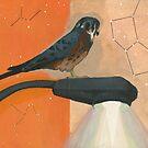 Kittyhawk  by Eva Landis