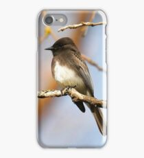 Black Phoebe iPhone Case/Skin