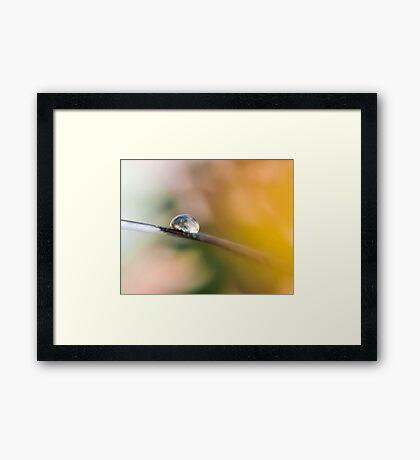 Teardrop on Feather Framed Print