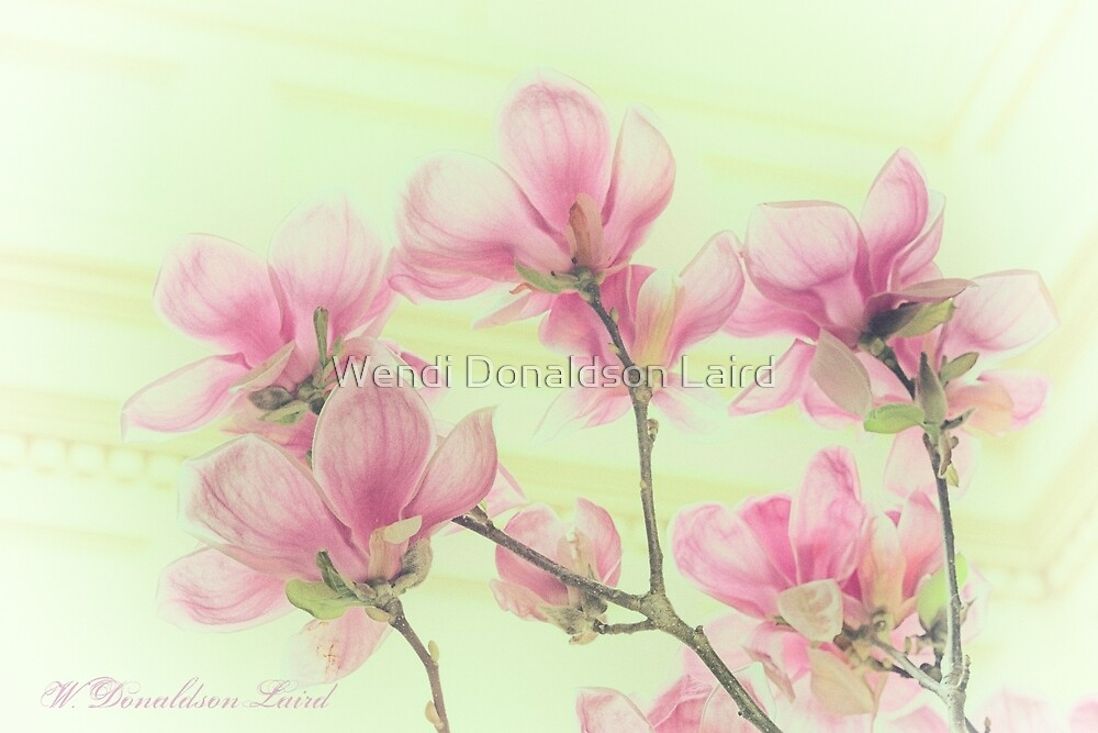 Magnolias by Wendi Donaldson Laird