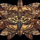 Death's Head Moth Mandala - Asymmetrical by jenithea
