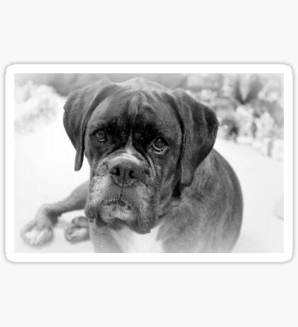Betrachten meiner neuen Jahre Auflösung ~ Boxer Dogs Series Sticker