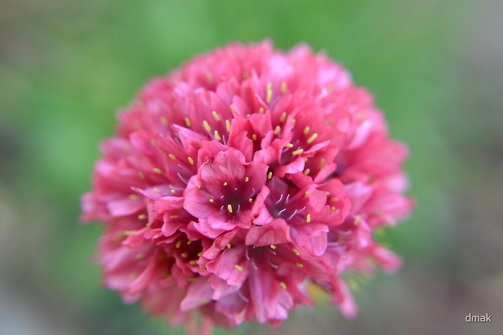 Brand new bloom by dmak