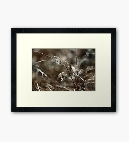 Pure Morning IV Framed Print