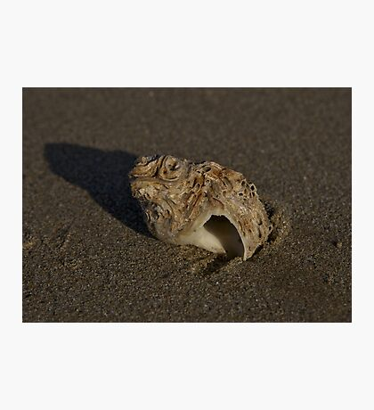 Weathered Whelk on Fahan Beach Photographic Print