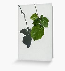 Sophisticated Shadows - Glossy Hazelnut Leaves on White Stucco - Vertical View Down Left  Greeting Card
