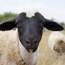 Half Black Sheep by Madcowontherun