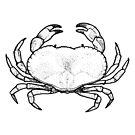 Crab by Andre Gascoigne