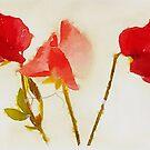 Sweet Pea Watercolour by John Edwards