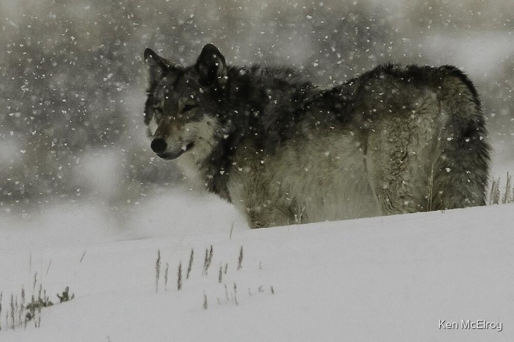 Winter Wolf #1 by Ken McElroy