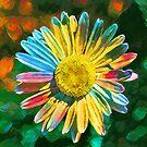 Rainbow Daisy Flower by flashman