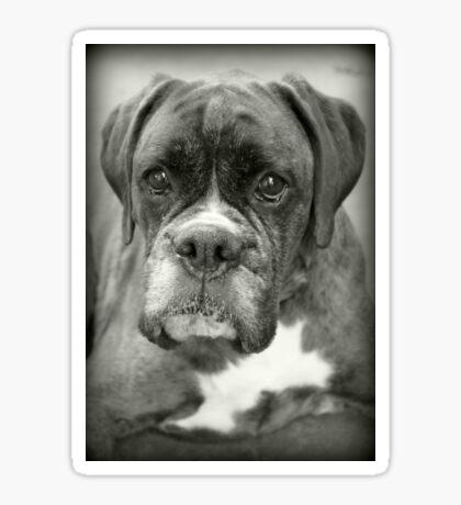 Ist das für mich? .... Boxer Dogs Series Sticker