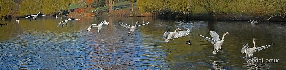 Panning for swans by kelvinLemur