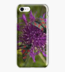 """Greater Knapweed with """"6-spot Burnet"""" Moths iPhone Case/Skin"""