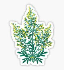 Wormwood - herbs Sticker