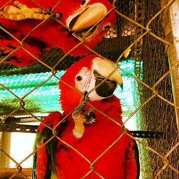 Macaw  by NonoZitro76