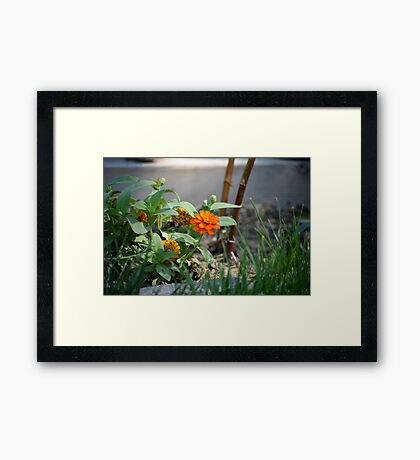 First Summer's Green Thumb Framed Print
