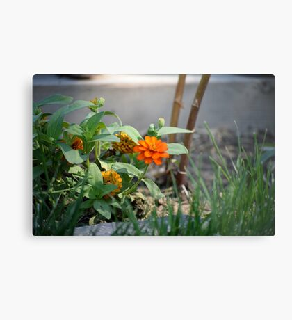 First Summer's Green Thumb Metal Print