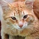 Ginger Tom Cat Portrait by taiche