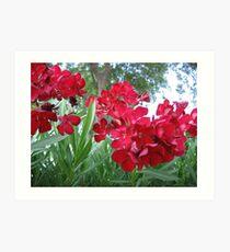 Oleander Art Print