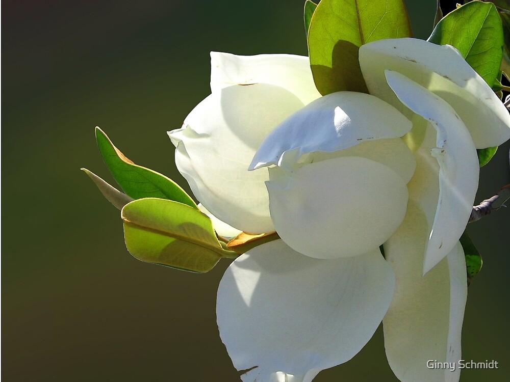 Magnolia 3.1 by Ginny Schmidt